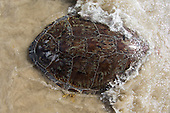UTMSI/FRIENDS OF THE ARK TURTLE RELEASE