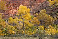 Autumn in Zion Canyon, Zion National Park Utah USA