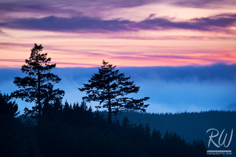 Trees and Foggy Sunset, Point Reyes National Seashore, California