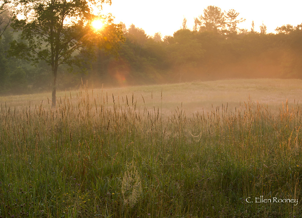 Summer sunrise and dew covered spider webs in a field at Firefly Farm, Hauverville, New York, U.S.A.