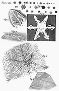 Observations of 'Of several kinds of frozen figures' showing frozen urine (1), snowflakes (2) and ice flakes (4,5,& 6).  From Robert Hooke 'Micrographia' London 1665. Engraving.