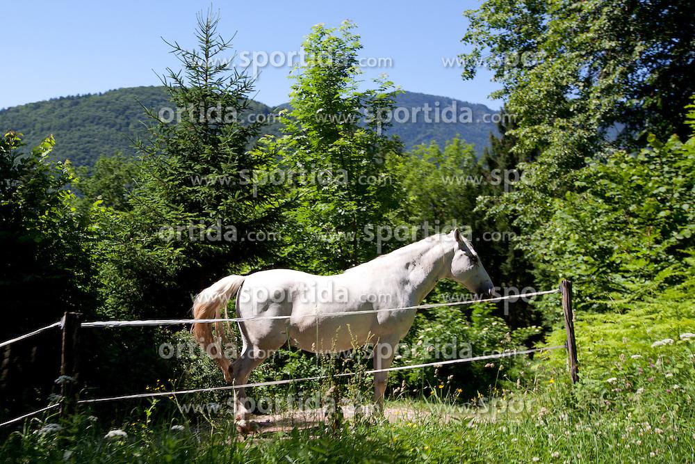 Horse during 3rd Stage (219 km) at 19th Tour de Slovenie 2012, on June 16, 2012, in Skofja Loka, Slovenia. (Photo by Matic Klansek Velej / Sportida.com)