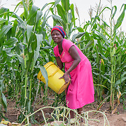 CAPTION: Annah, heavily pregnant, waters crops using a bucket. When the Bindagombe Irrigation Scheme is handed over to its beneficiaries, farmers will no longer have to carry water from rivers in order to water their crops. LOCATION: Mawoneke Village, Chivi District, Masvingo Province, Zimbabwe. INDIVIDUAL(S) PHOTOGRAPHED: Annah Nyikadzino.