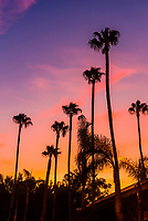 Palm trees silhouetted against an orange sky, Sherman Oaks, Los Angeles, California USA.