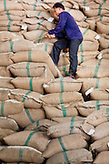 08 MAY 2010 - PATHUM THANI, THAILAND: A worker climbs up stacked bags of rice at the J&D Rice Group Ltd warehouse in Pathum Thani, about 30 miles north of Bangkok, Thailand. According to the UN Food and Agricultural Organization (FAO),Thailand's rice harvest is expected to be reduced by about 16% this year because of a persistent drought across the country but most pronounced in the northeast region of Thailand. A spokesperson for J&D said they get rice from across Thailand and so far there haven't been any shortages. J&D exports all of their rice China.  PHOTO BY JACK KURTZ