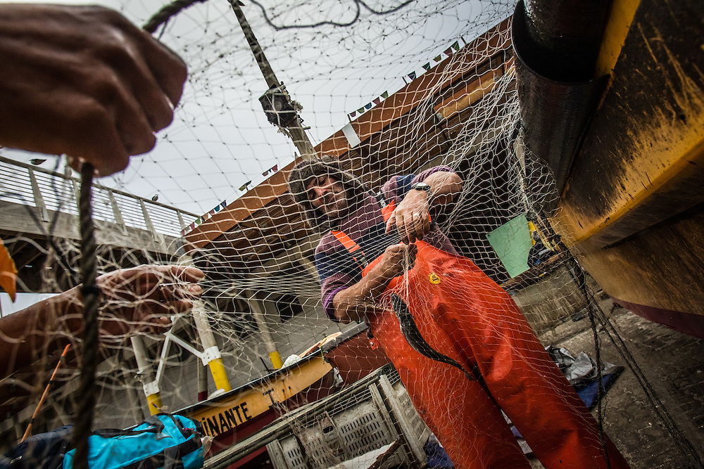 VALPARAISO, CHILE - MARCH 18, 2014: Artisanal fisherman Mario Rojas, 58, pulls hake fish from his net after returning to port in Valparaiso, Chile. Mr. Rojas has been fishing for 44 years, and is a 4th generation artisanal fisher. PHOTO: Meridith Kohut for The World Wildlife Fund