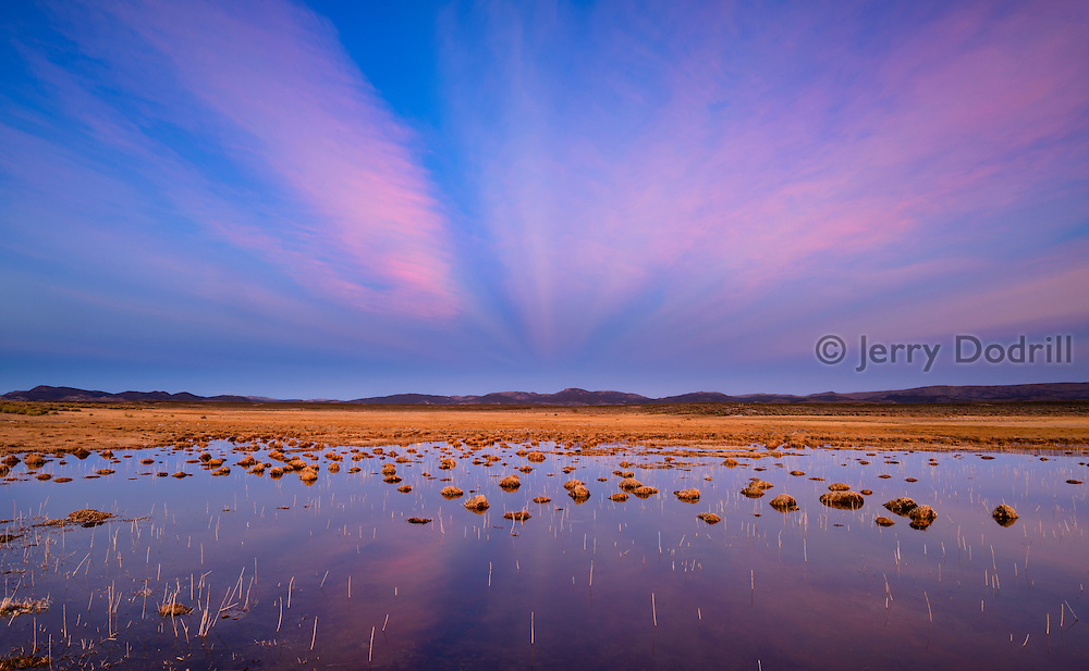 Anti-crepuscular rays stream across the sky at twilight over a wetland in Monitor Valley at Potts Ranch, Eureka, Nevada.