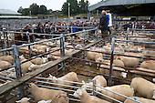 Norwich Livestock Market 2016 - Colour