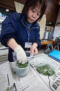 Yoneko Kageyama testing locally grown crops for radioactive contamination at the Becquerel Centre at a farmer's Market in Miharu, Fukushima, Japan, Wednesday May 1st 2013.