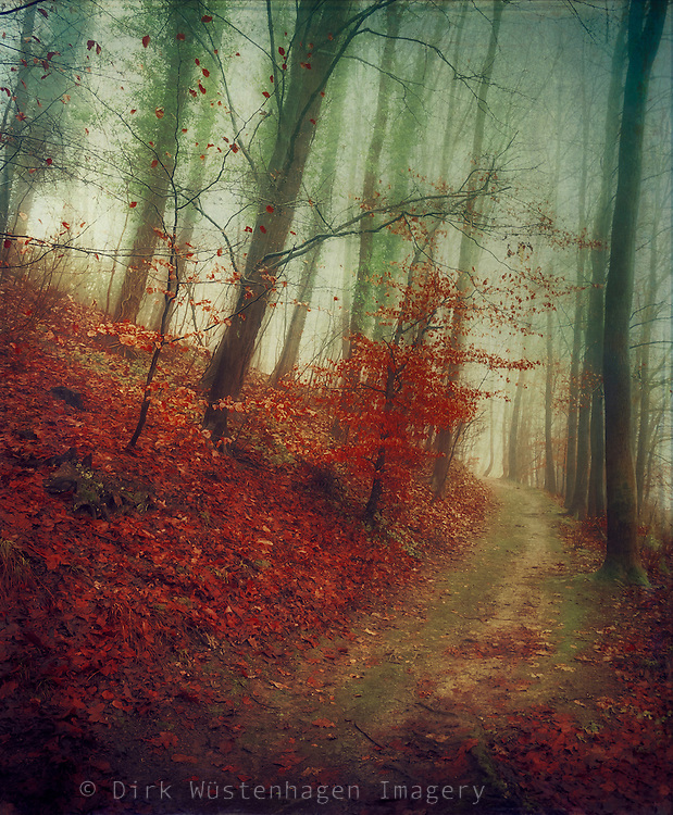 Dreamy forest scene - texturized photograph<br /> rints &amp; more: http://society6.com/DirkWuestenhagenImagery/Songlines-EUA_Print#1=45