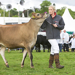 Otley Show 2016  Cattle
