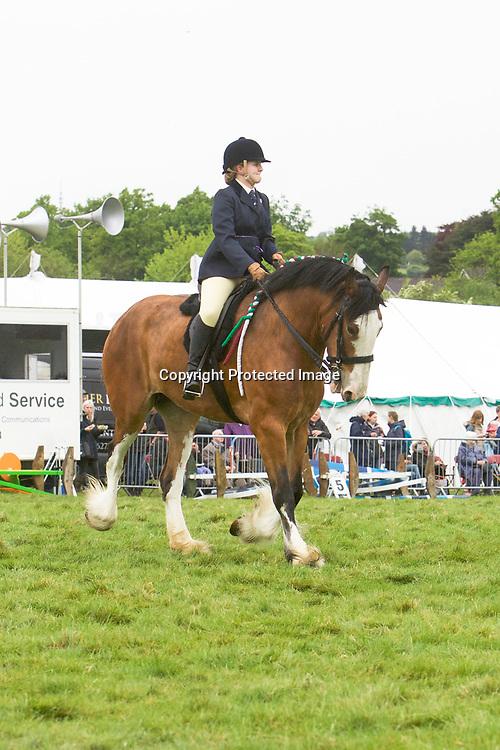 Rosie Metcalfe riding HARTCLIFFE ADELE<br /> Winner  Ridden Heavy Horse Class