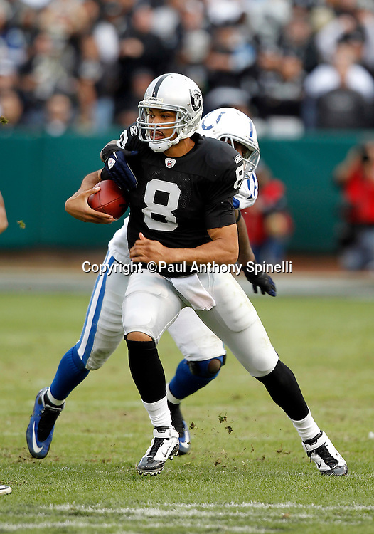 Oakland Raiders quarterback Jason Campbell (8) gets chased and brought down on a short run by Indianapolis Colts defensive end Robert Mathis (98) during the NFL week 16 football game against the Indianapolis Colts on Sunday, December 26, 2010 in Oakland, California. The Colts won the game 31-26. (©Paul Anthony Spinelli)