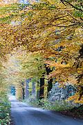 Straße am Zeughaus, Großer-Tzschandbach-Tal, Kirnitzschtal, Herbstwald, Sächsische Schweiz, Elbsandsteingebirge, Sachsen, Deutschland | Großer-Tzschandbach-Valley, Kirnitzsch valley, autumn, Saxon Switzerland, Saxony, Germany