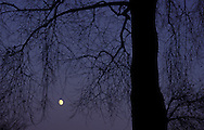 DEU, Germany, Bergisches Land region, tree and moon.....DEU, Deutschland, Bergisches Land, Baum und Mond...
