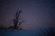 Whitebark pine (Pinus albicaulis) snag along the rim of Crater Lake in winter. Crater Lake National Park, Oregon.