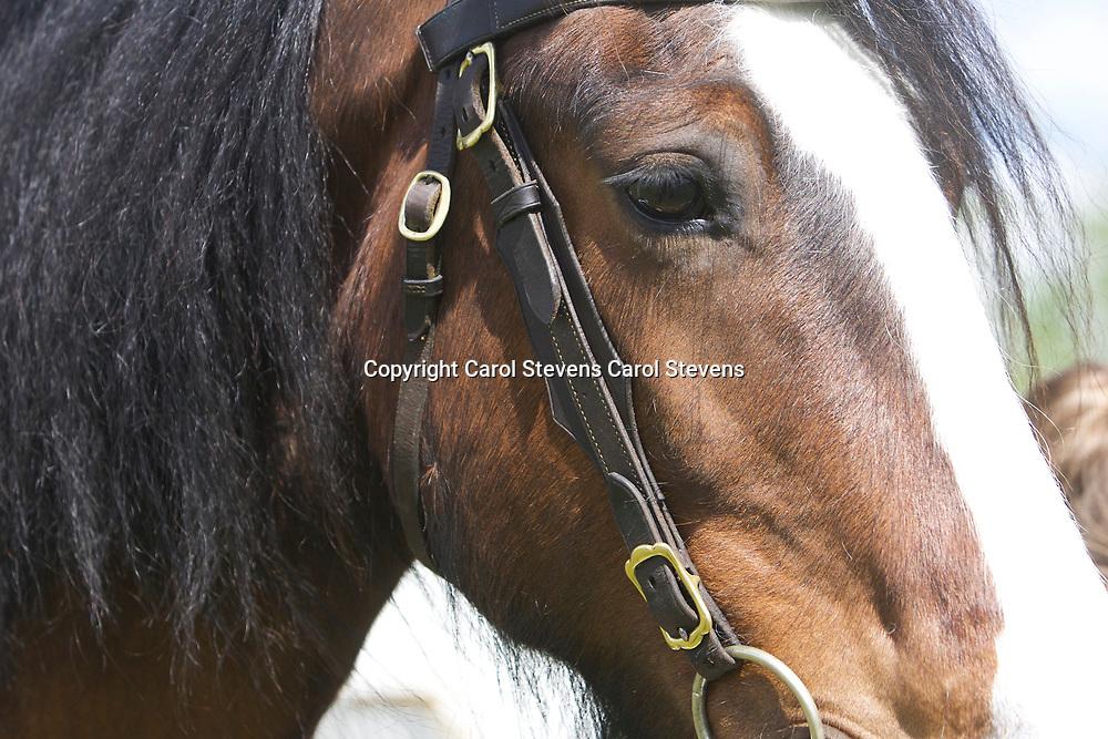 Lucy Blakey<br /> WINNER  Best Junior Handler  Heavy Horses