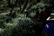 National Park Service ranger Russ Cash leads a wildflower hike at Cedar Breaks National Monument, Utah.