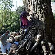 "LEWIS AND CLARK SURVIVOR -- Children play in the roots of an old cottonwood tree at Lewis and Clark State Park near Onawa, Ia.  Park ranger Russ Field, who has taken a core sample of the tree, determined it's age to be about 250 years.  ""I had so many people ask me if this tree could have been here when Lewis and Clark passed through, that I just had to have that question answered,"" said Field. Indeed, the tree would have been about 50 years old then."