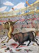 Battle between a bull and a lion in the bullring at Madrid, Spain.  Spectacle staged to prove that the Bull, not the Lion, is the King of the Beasts.  Spanish Sport, Entertainment