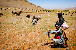 Shepherds with their flock of goats and sheep in the Atlas Mountains, Morocco<br /> <br /> (c) Andrew Wilson | Edinburgh Elite media