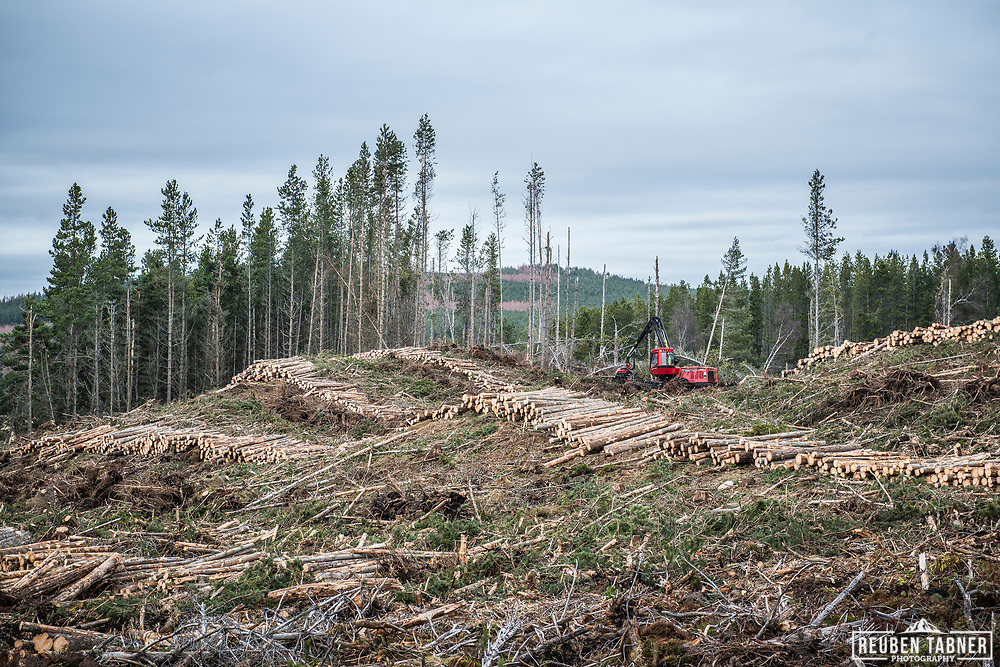 A forest harvester works, felling trees in a confer forest near Inverness in Scotland.