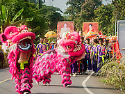 20 SEPTEMBER 2015 - SARIKA, NAKHON NAYOK, THAILAND: Chinese Lion Dancers lead a procession to a local river for the immersion of the Ganesha deity at the Ganesh festival at Shri Utthayan Ganesha Temple in Sarika, Nakhon Nayok. Ganesh Chaturthi, also known as Vinayaka Chaturthi, is a Hindu festival dedicated to Lord Ganesh. Ganesh is the patron of arts and sciences, the deity of intellect and wisdom -- identified by his elephant head. The holiday is celebrated for 10 days. Wat Utthaya Ganesh in Nakhon Nayok province, is a Buddhist temple that venerates Ganesh, who is popular with Thai Buddhists. The temple draws both Buddhists and Hindus and celebrates the Ganesh holiday a week ahead of most other places.    PHOTO BY JACK KURTZ