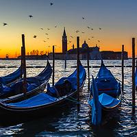Gondolas and birds in Venice