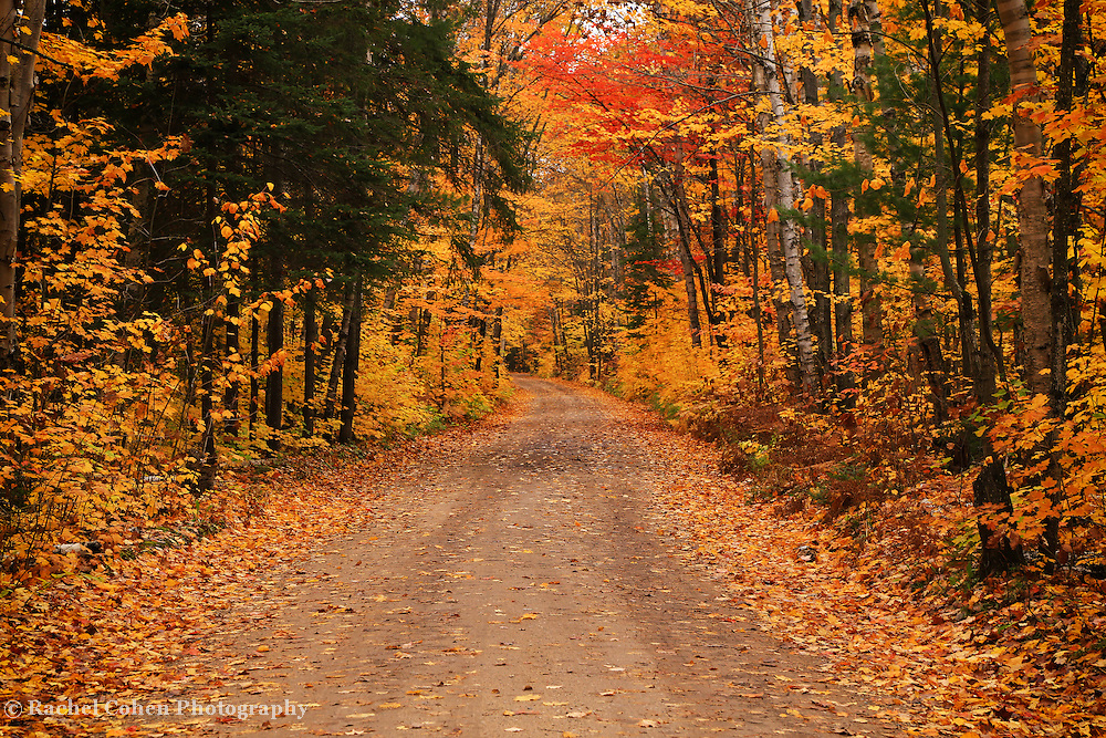 &quot;Autumnal Harmony&quot;<br /> <br /> Pure autumn bliss on a rural country road!!<br /> <br /> Autumn Landscapes by Rachel Cohen