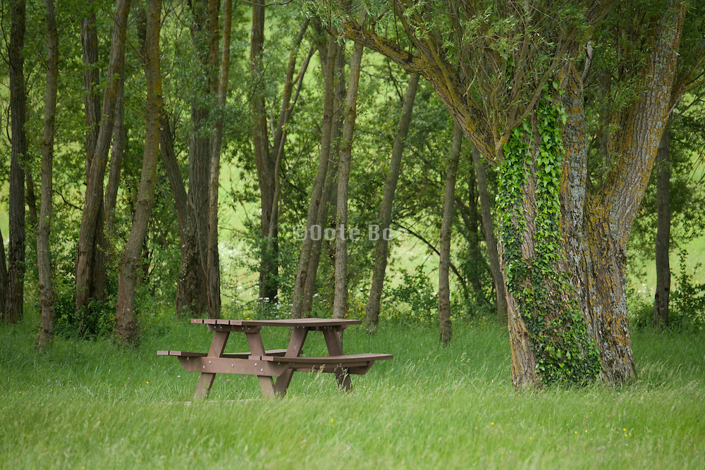 park bench in the woods
