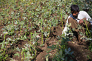 Dansingh weeding his vegetables on his farm, Sendhwa, India.<br /> <br /> Dansingh has recently made the switch from conventional cotton farming to organic. He has also expanded to grow more vegetables.<br /> <br /> He can remember his father used to farm organic cotton.