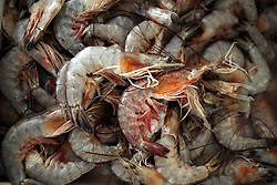 11june 2010. Westwego, Louisiana. <br /> Shrimp imported from Texas at the Shrimp Lot in Westwego just outside New Orleans. Incomes have crashed as all seafood prices have risen over 30% in the past 4 weeks alone as stocks run low thanks to closed fishing grounds affected by oil pollution. BP's disastrous environmental catastrophe out in the Gulf of Mexico threatens  the livelihood of many thousands of workers affiliated to the fishing industry in Louisiana. Earnings are down as much as  50% of those pre BP's oil disaster. Thousands of barrels of oil per day continues to leak into the Gulf because of the explosion and collapse of the Deepwater Horizon drilling platform 46 miles out to sea. The closure of fishing grounds both east and west of the Mississippi river outflow is crippling thousands of local fishermen and all affiliated businesses and families who rely on the seafood industry. None of the shrimp or other seafood offered at the market are fresh catch from today. Everything has been through the IQF (Instant Quick Freeze) process and is seafood caught out of state or earlier in the season and brought from storage freezers in Venice and Grand Isle. Louisiana stocks are virtually non-existant. With few new catches, the market will be forced to rely on farmed shrimp shipped in from Texas and Georgia. Local traders refuse to stock Chinese import fish raised with growth hormones, pesticides, fungicides and other contaminants widely found in Chinese farm raised seafood. Many fear losing their jobs and everything they own as a result of BP's Gulf Coast environmental disaster.<br /> Photo; Charlie Varley/varleypix.com