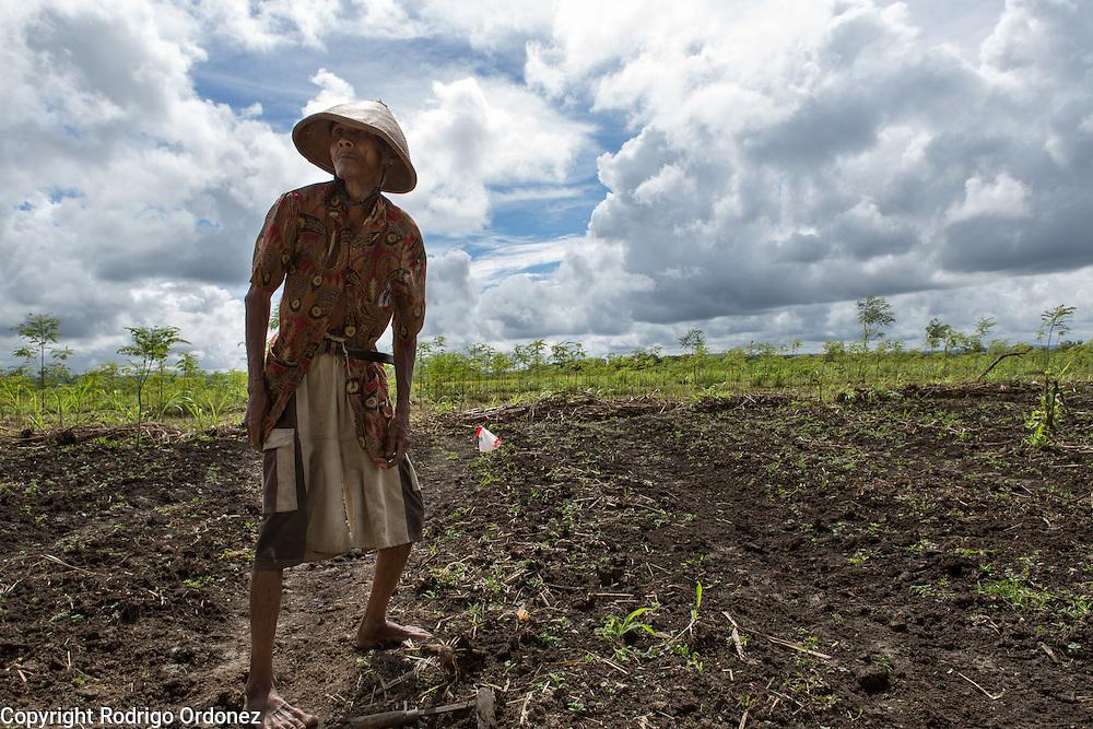 Farmer Kastomo, around 65 years of age, sows corn seeds in a field in Wareng, Wonosari subdistrict, Gunung Kidul district, Yogyakarta Special Region, Indonesia.