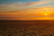 2-Row Barley with frost at sunrise<br /> Trochu<br /> Alberta<br /> Canada