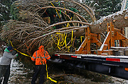 Worker's prepare the 2017 Capitol Christmas Tree for transport after it was cut down at the Historic Upper Ford Ranger Station in the upper Yaak Valley. Kootenai National Forest in the Purcell Mountains, northwest Montana.