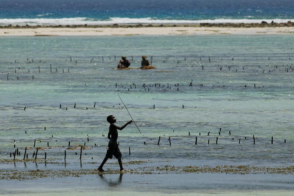 Africa, Tanzania, Zanzibar, Matemwe Bay, Young boy playing in shallows near women harvesting seaweed from tidal lagoon in Indian Ocean