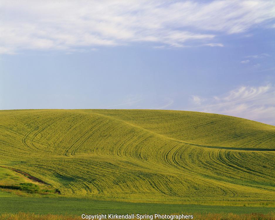 AA07298-04...WASHINGTON - Wheat fields in the fertile Palouse Region of Eastern Washington.