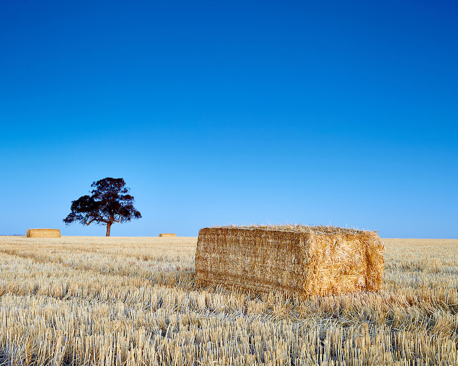 A lone tree stands watch over it's paddock of hay bailes, Barossa Valley, Australia.