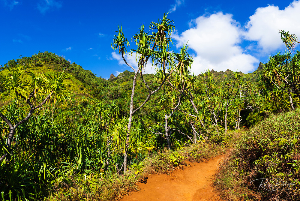 Lush vegitation along the Kalalau Trail on the Na Pali Coast, Island of Kauai, Hawaii USA