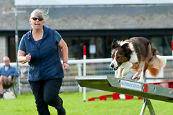 © Licensed to London News Pictures. 18/08/2018. Llanelwedd, Powys, UK. Agility events take place on the second day of The Welsh Kennel Club Dog Show, held at the Royal Welsh Showground, Llanelwedd in Powys, Wales, UK. Photo credit: Graham M. Lawrence/LNP