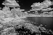 Clouds and aquatic vegetation on Isabel Lake<br />Kenora<br />Ontario<br />Canada
