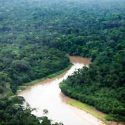Rivière et forêt primaire encore préservée.   Rio e floresta primaria ainda preservada.