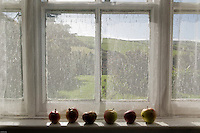 Apples on a window sill, West Kerry, Ireland 2.