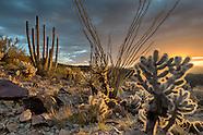 Arizona-Organ Pipe