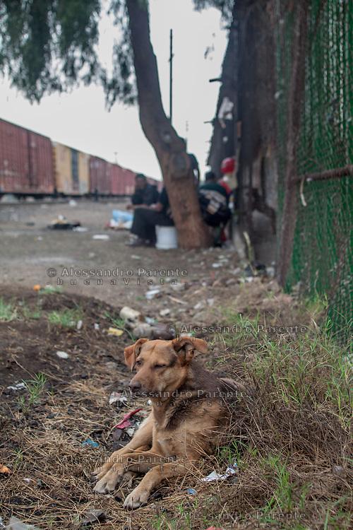 Canela, migrant dog.<br /> Canela, cane migrante.