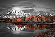 Mt.Moran ~ with Fall colored Qauky's on the banks of the Snake River headwaters.