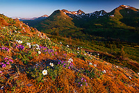 Mid-summer sunrise on Pillar Mountain behind Kodiak, Alaska.
