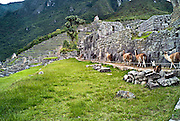PERU, MACHU PICCHU:  Line of llamas walking beside the ancient Inca stone walls at Machu Picchu. Machu Picchu is a pre-Columbian Inca site located 2,430 metres (8,000 ft) above sea level. It was built around 1460 AD but was abandoned as an official site for the Inca rulers a hundred years later, at the time of the Spanish conquest of the Inca Empire.