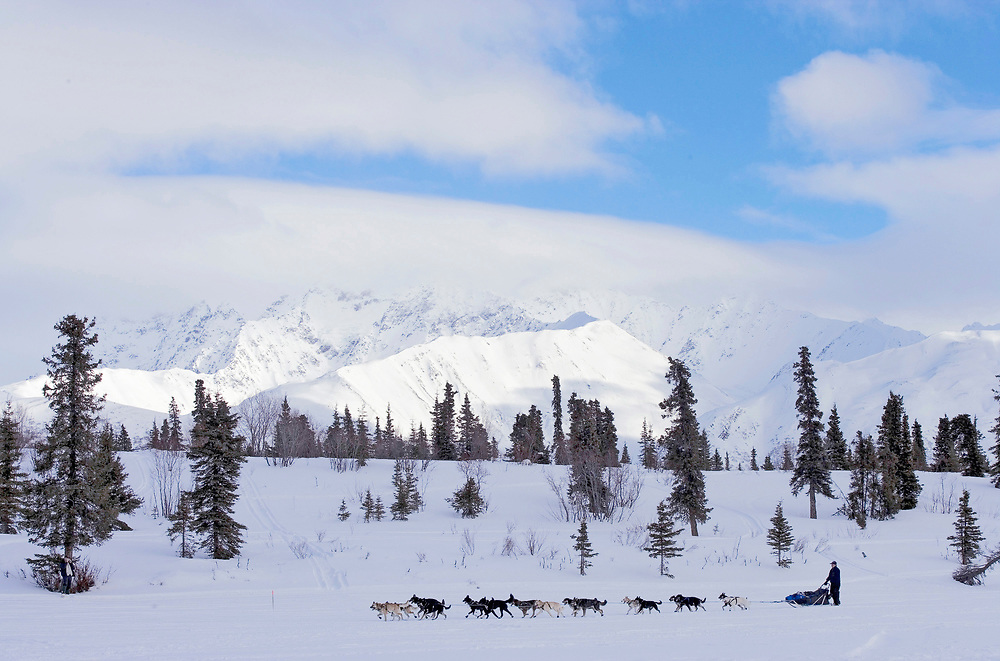 USA, Alaska, Musher with dog team arrives on snow-covered Puntilla Lake at Rainy Pass checkpoint in 2005 Iditarod sled dog race