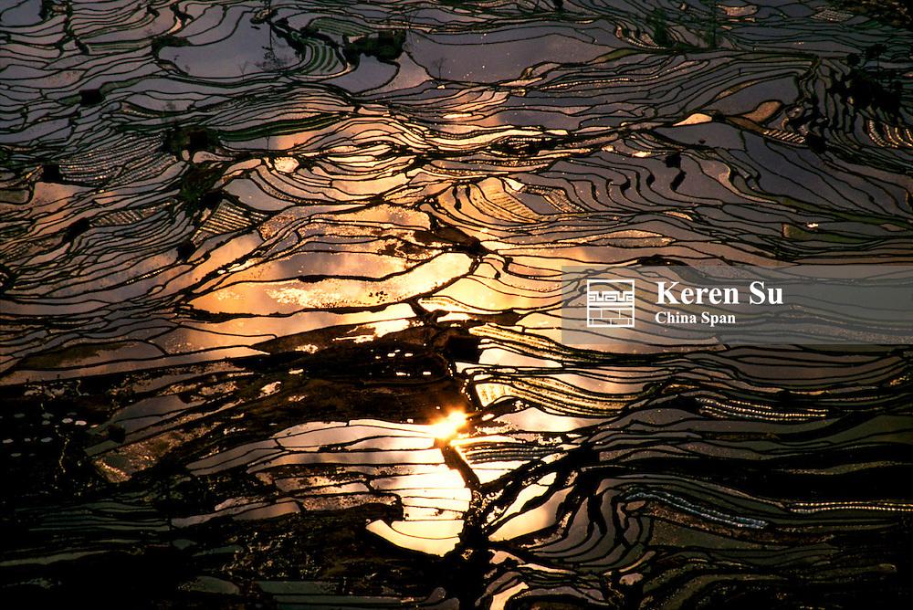 Water filled rice terraces at sunset, Yuanyang, Yunnan Province, China